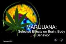 marijuana_nida